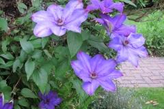 38-My Garden (180)